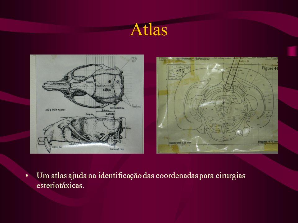 Atlas Um atlas ajuda na identificação das coordenadas para cirurgias esteriotáxicas.