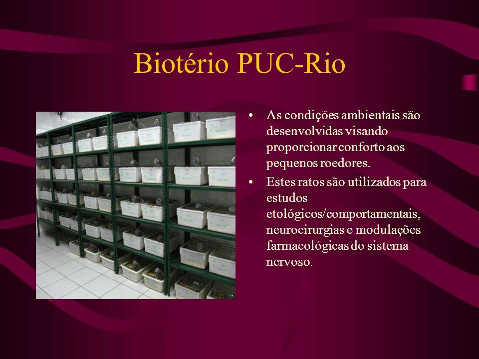 Biotério PUC-Rio As condições ambientais são desenvolvidas visando proporcionar conforto aos pequenos roedores.
