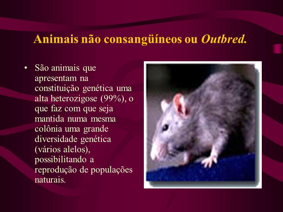 Animais não consangüíneos ou Outbred.