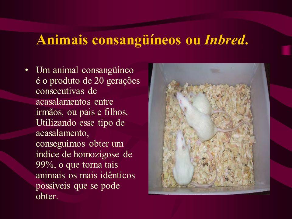 Animais consangüíneos ou Inbred.