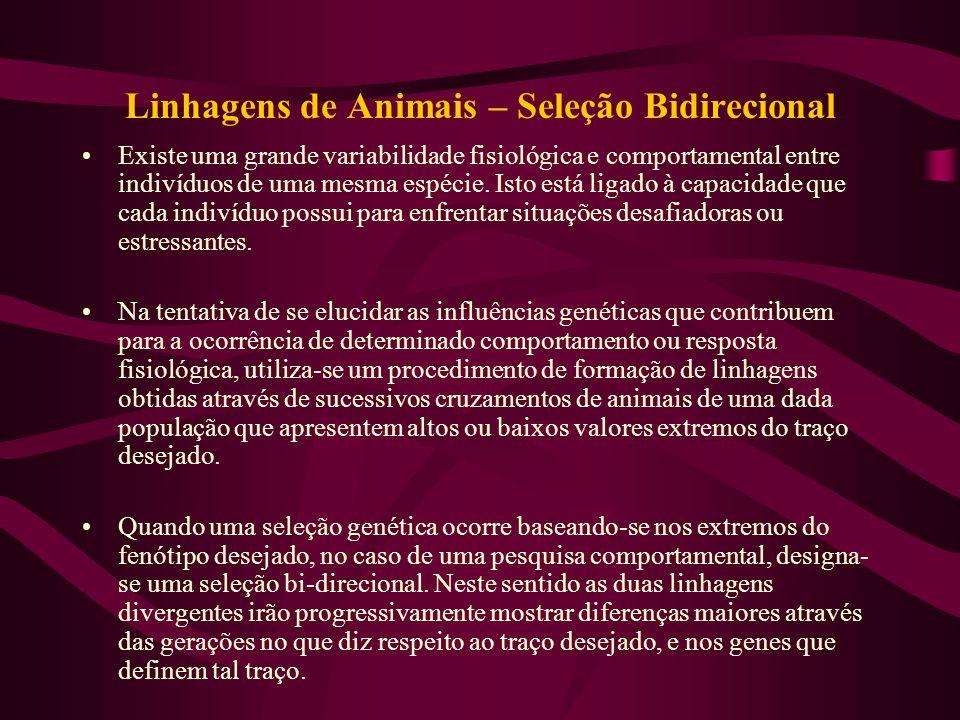 Linhagens de Animais – Seleção Bidirecional