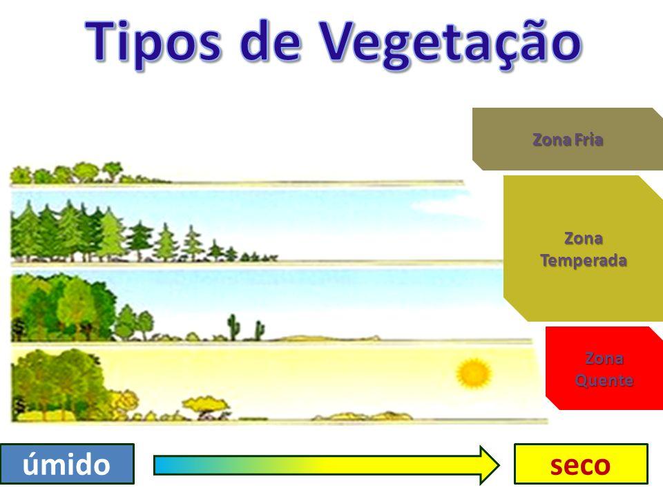 Tipos de Vegetação Zona Fria Zona Temperada Zona Quente úmido seco