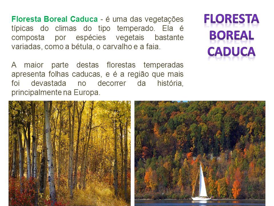 Floresta Boreal Caduca