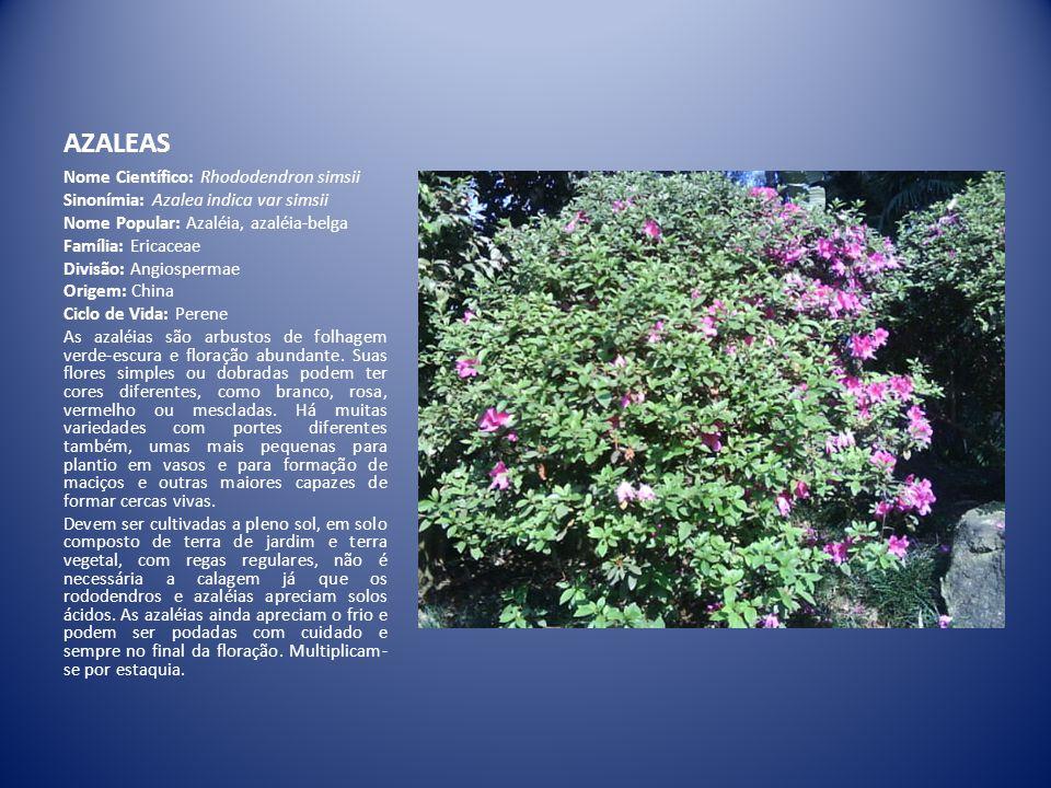 AZALEAS Nome Científico: Rhododendron simsii