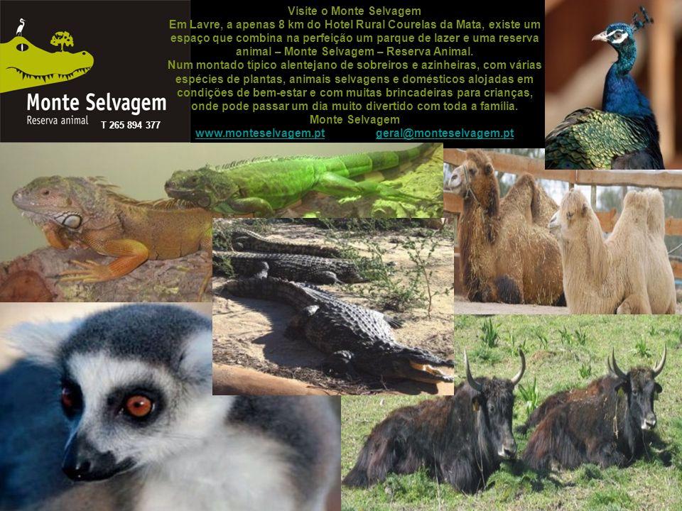 Visite o Monte Selvagem Em Lavre, a apenas 8 km do Hotel Rural Courelas da Mata, existe um espaço que combina na perfeição um parque de lazer e uma reserva animal – Monte Selvagem – Reserva Animal. Num montado típico alentejano de sobreiros e azinheiras, com várias espécies de plantas, animais selvagens e domésticos alojadas em condições de bem-estar e com muitas brincadeiras para crianças, onde pode passar um dia muito divertido com toda a família. Monte Selvagem www.monteselvagem.pt geral@monteselvagem.pt
