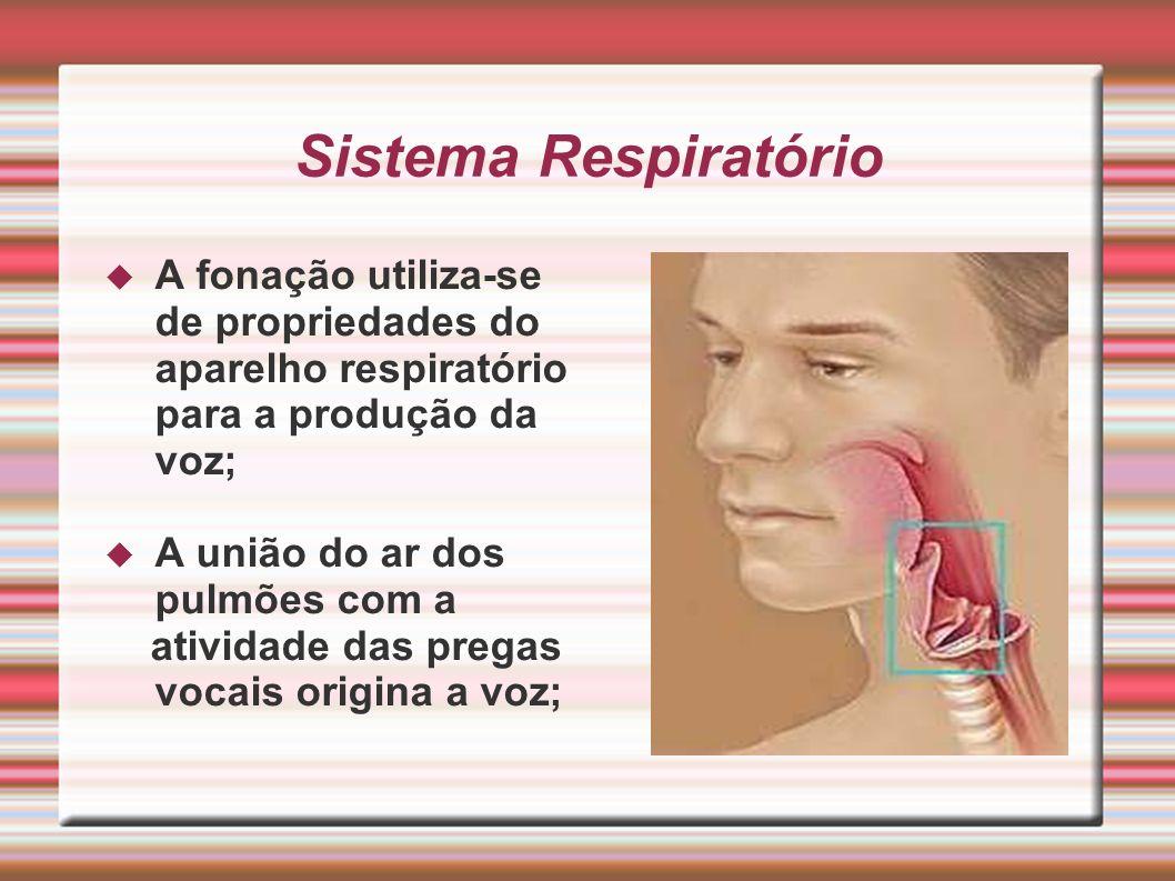 Sistema Respiratório A fonação utiliza-se de propriedades do aparelho respiratório para a produção da voz;