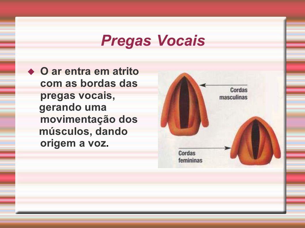 Pregas Vocais O ar entra em atrito com as bordas das pregas vocais,