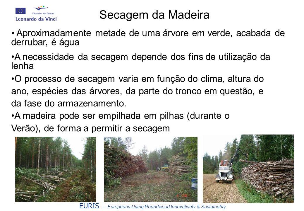 Secagem da Madeira Aproximadamente metade de uma árvore em verde, acabada de derrubar, é água.