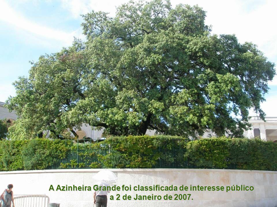 A Azinheira Grande foi classificada de interesse público a 2 de Janeiro de 2007.