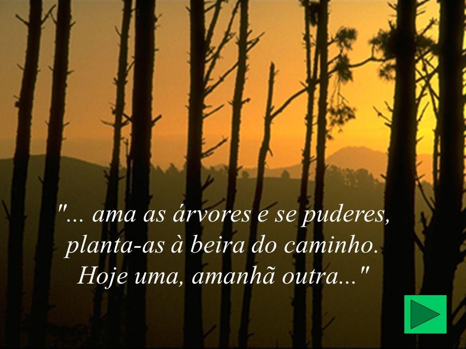 . ama as árvores e se puderes, planta-as à beira do caminho