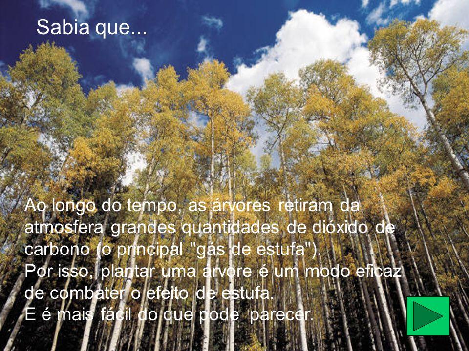 Sabia que... Ao longo do tempo, as árvores retiram da atmosfera grandes quantidades de dióxido de carbono (o principal gás de estufa ).