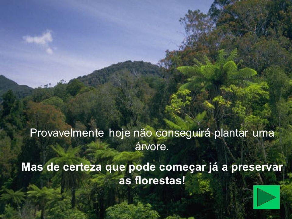 Mas de certeza que pode começar já a preservar as florestas!