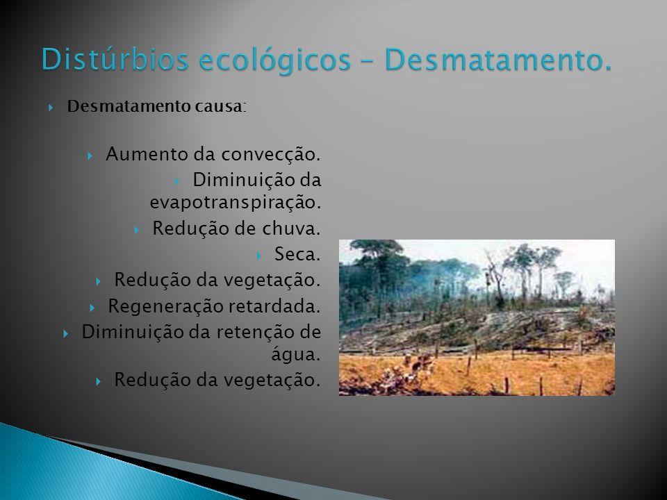 Distúrbios ecológicos – Desmatamento.