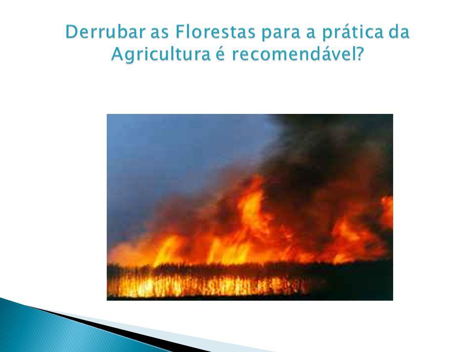 Derrubar as Florestas para a prática da Agricultura é recomendável