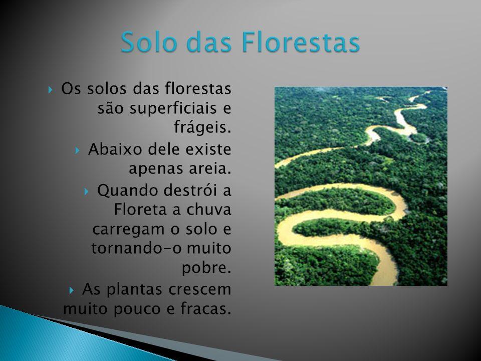 Solo das Florestas Os solos das florestas são superficiais e frágeis.
