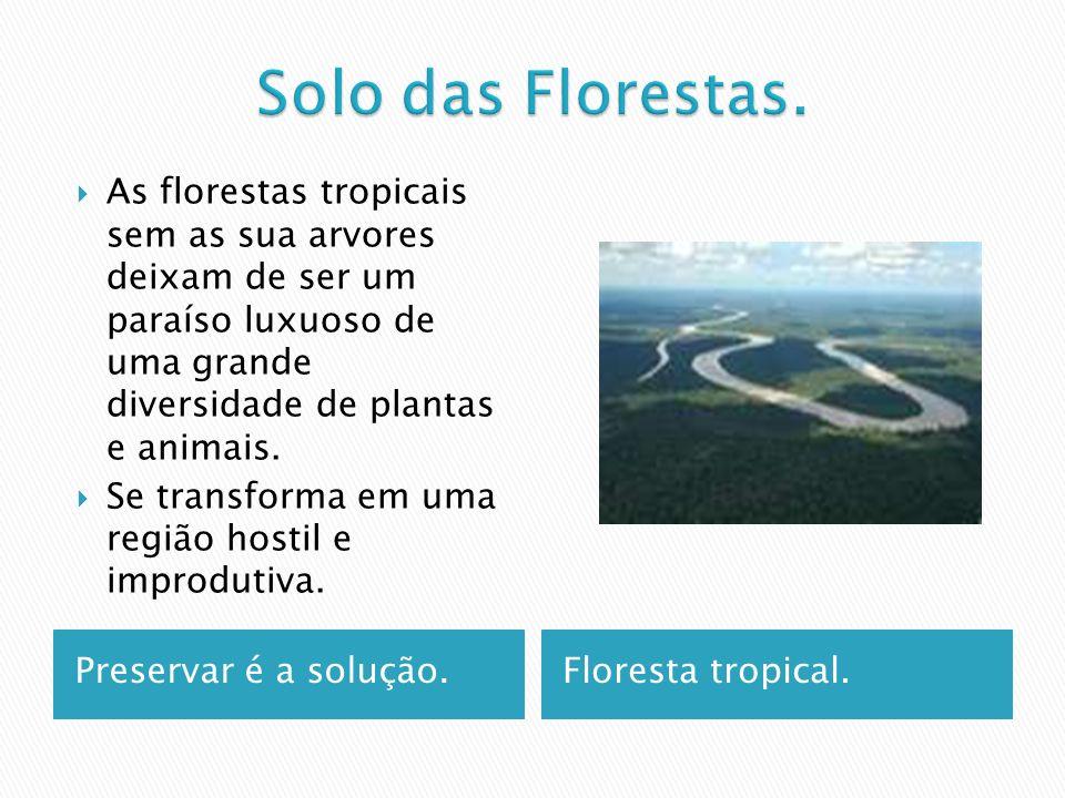 Solo das Florestas. As florestas tropicais sem as sua arvores deixam de ser um paraíso luxuoso de uma grande diversidade de plantas e animais.