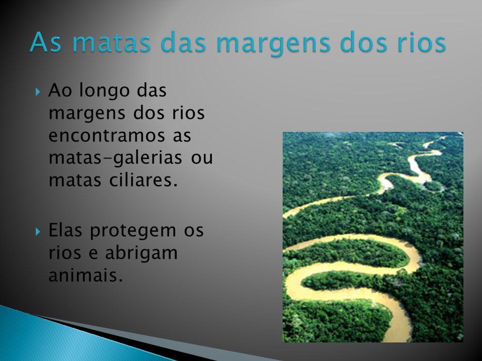As matas das margens dos rios