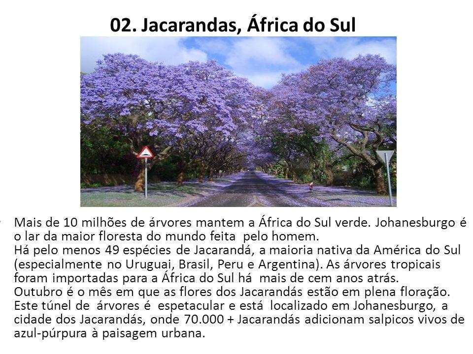 02. Jacarandas, África do Sul