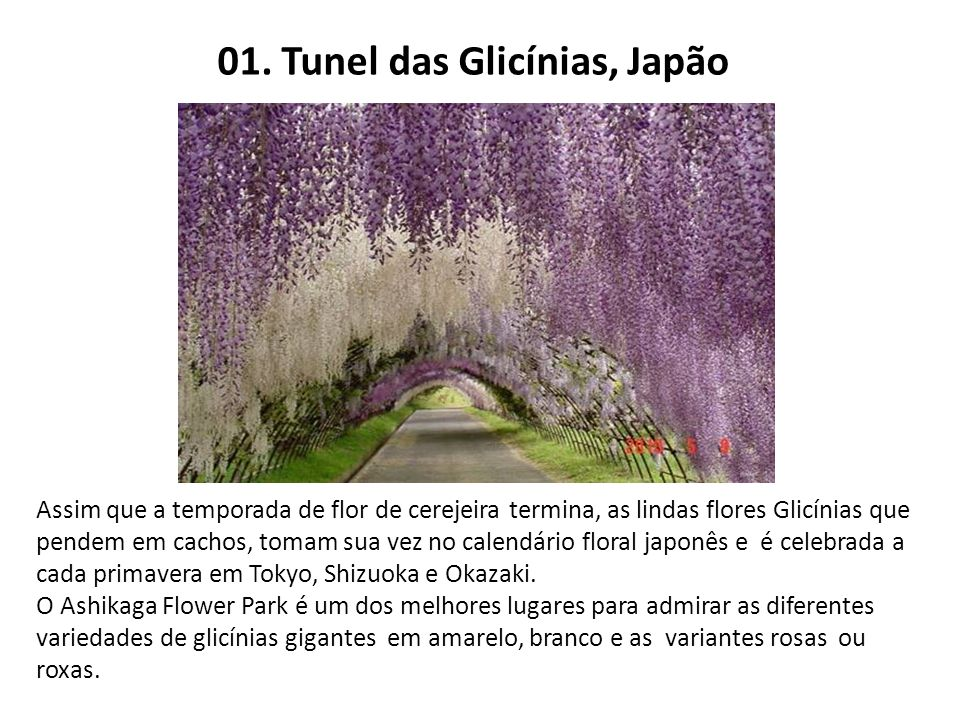 01. Tunel das Glicínias, Japão