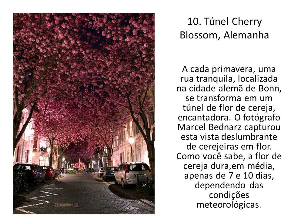 10. Túnel Cherry Blossom, Alemanha