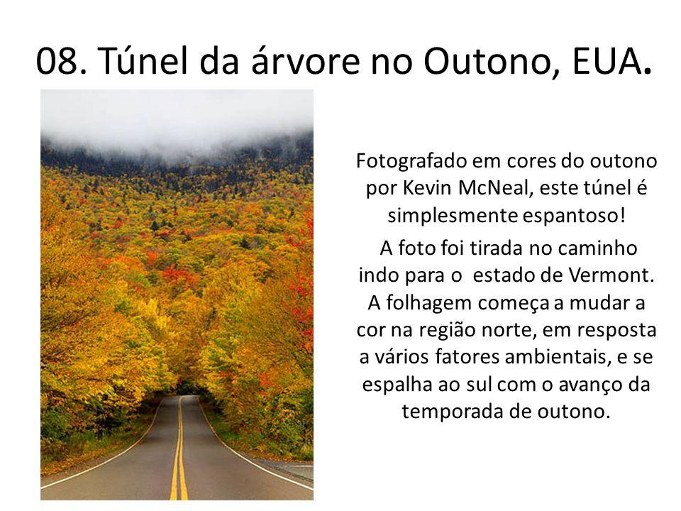 08. Túnel da árvore no Outono, EUA.