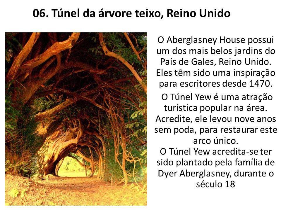 06. Túnel da árvore teixo, Reino Unido
