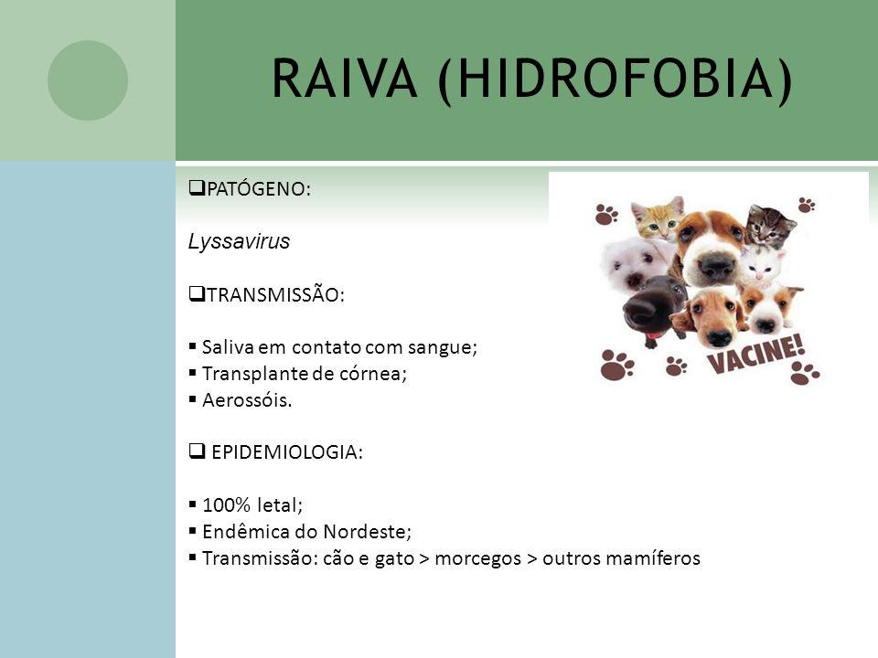 RAIVA (HIDROFOBIA) PATÓGENO: Lyssavirus TRANSMISSÃO: