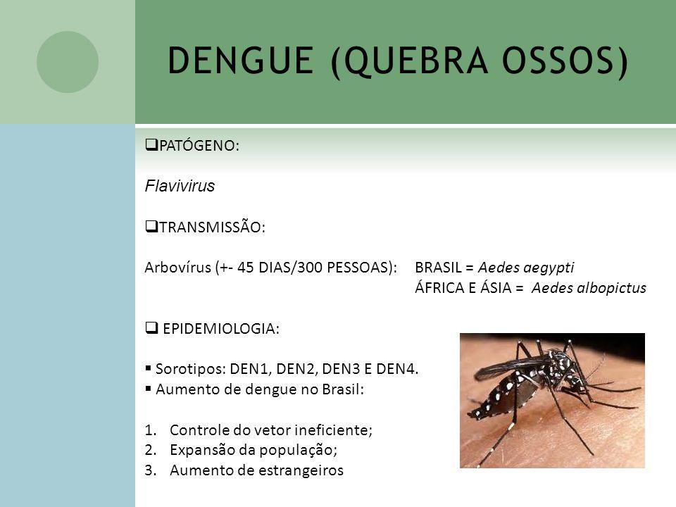 DENGUE (QUEBRA OSSOS) PATÓGENO: Flavivirus TRANSMISSÃO:
