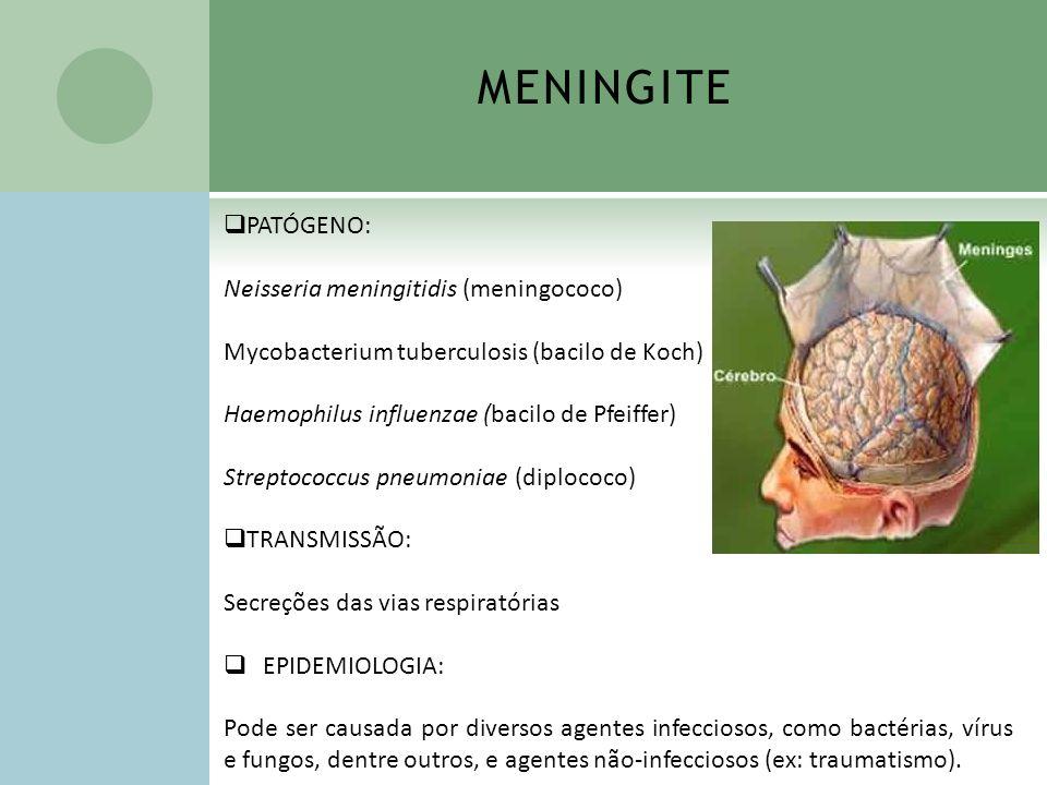 MENINGITE PATÓGENO: Neisseria meningitidis (meningococo)