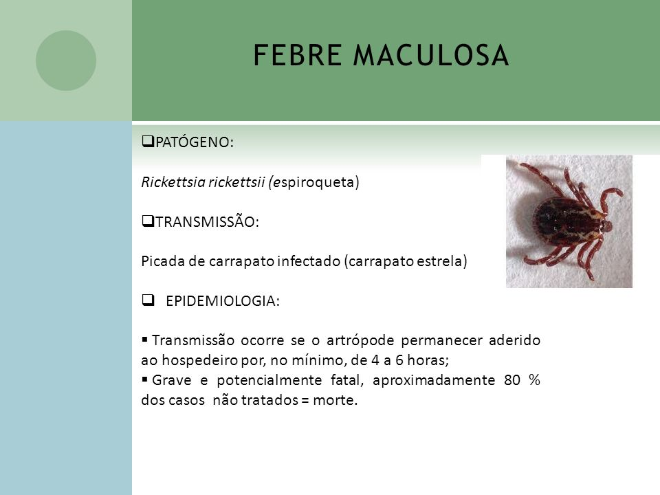 FEBRE MACULOSA PATÓGENO: Rickettsia rickettsii (espiroqueta)