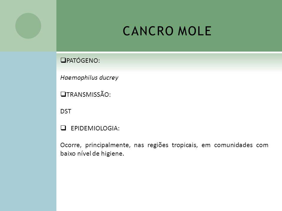 CANCRO MOLE PATÓGENO: Haemophilus ducrey TRANSMISSÃO: DST