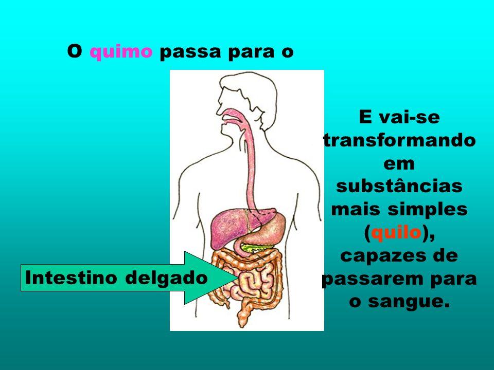 O quimo passa para o E vai-se transformando em substâncias mais simples (quilo), capazes de passarem para o sangue.