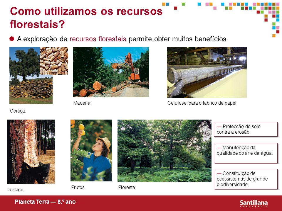 Como utilizamos os recursos florestais