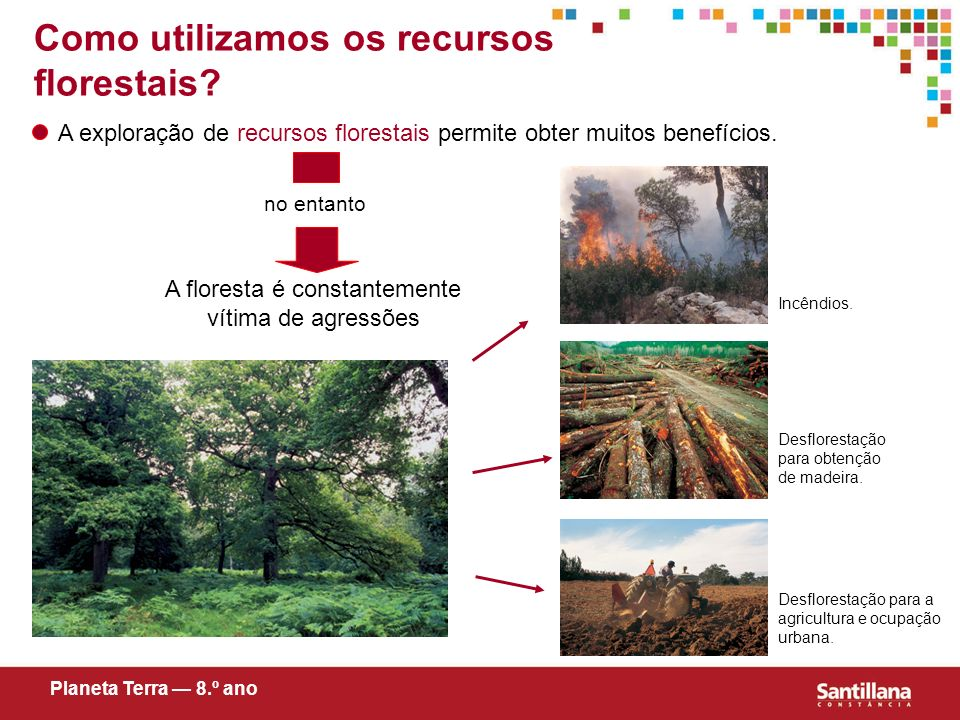 A floresta é constantemente vítima de agressões