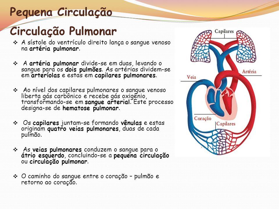 Pequena Circulação Circulação Pulmonar