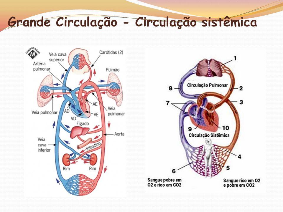 Grande Circulação - Circulação sistêmica