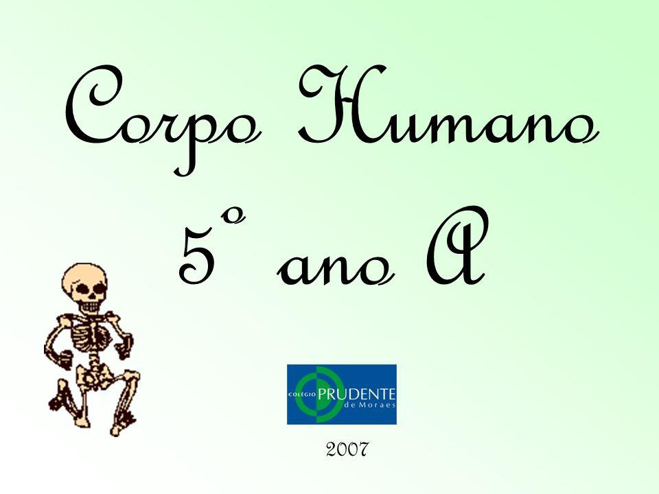 Corpo Humano 5º ano A 2007