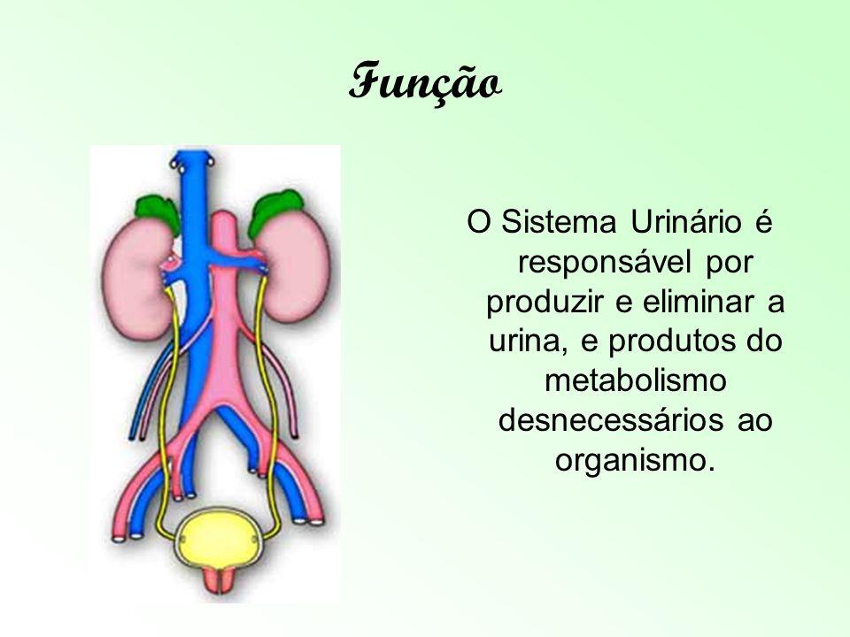 Função O Sistema Urinário é responsável por produzir e eliminar a urina, e produtos do metabolismo desnecessários ao organismo.
