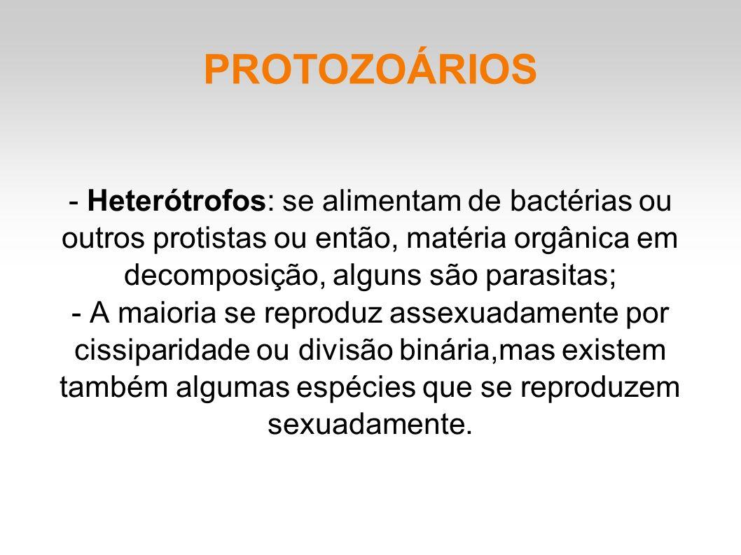 PROTOZOÁRIOS - Heterótrofos: se alimentam de bactérias ou outros protistas ou então, matéria orgânica em decomposição, alguns são parasitas;