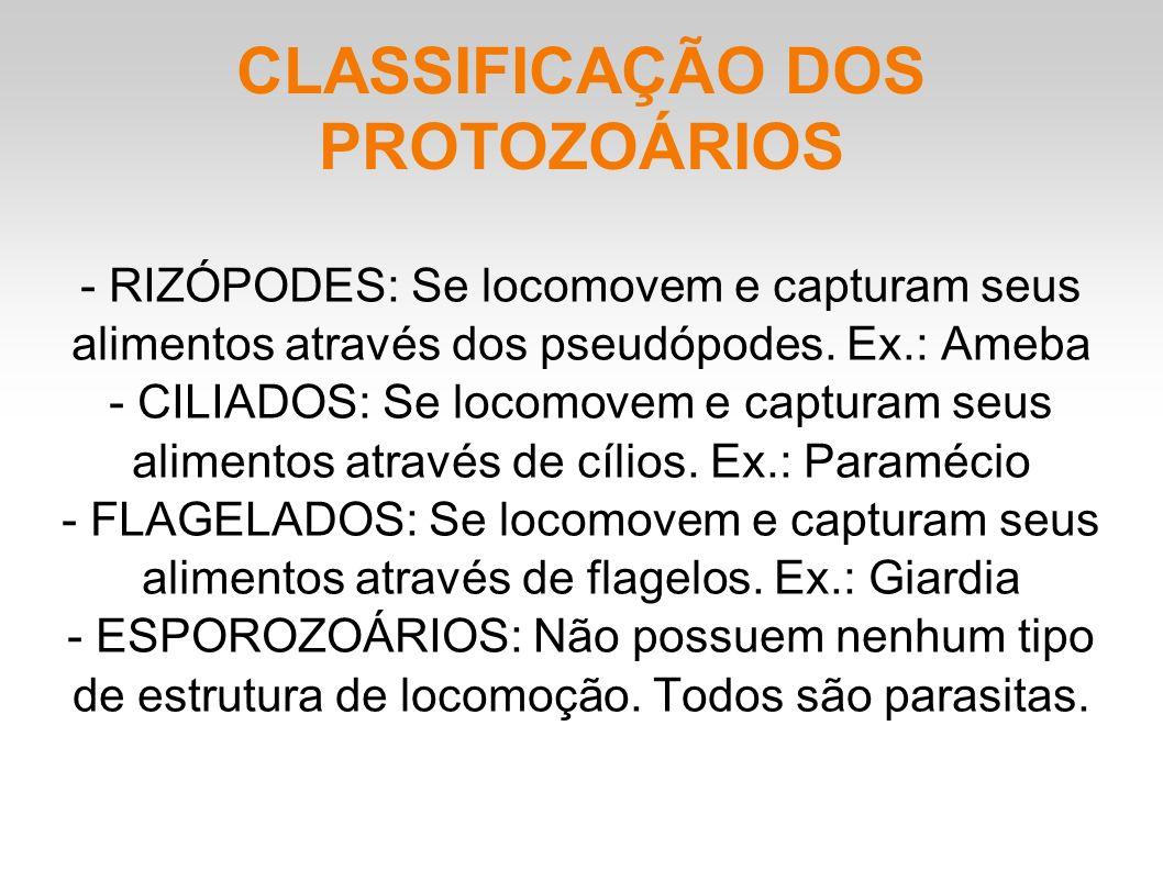 CLASSIFICAÇÃO DOS PROTOZOÁRIOS