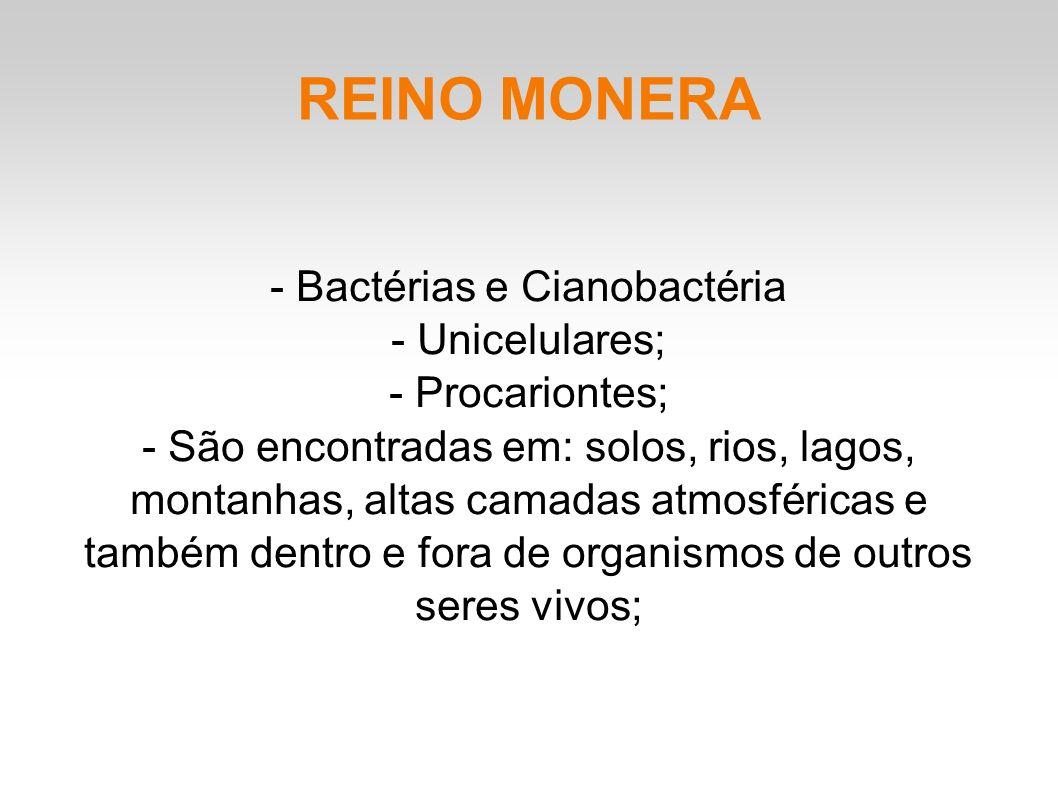 - Bactérias e Cianobactéria