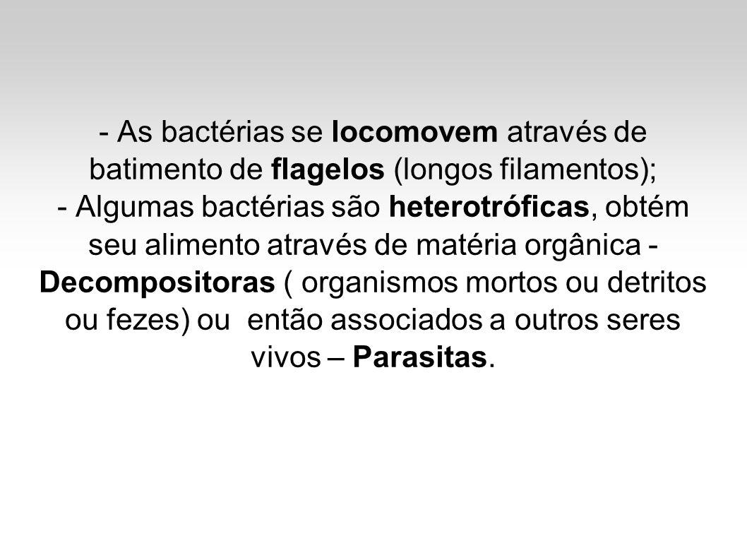 - As bactérias se locomovem através de batimento de flagelos (longos filamentos);