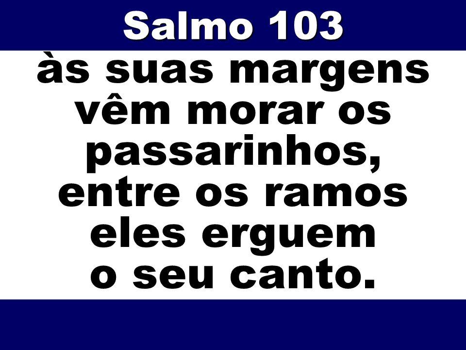 Salmo 103 às suas margens vêm morar os passarinhos, entre os ramos eles erguem o seu canto.