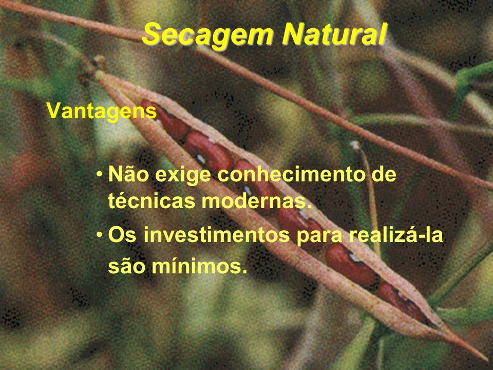 Secagem Natural Vantagens Não exige conhecimento de técnicas modernas.