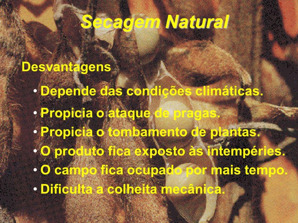 Secagem Natural Desvantagens Depende das condições climáticas.