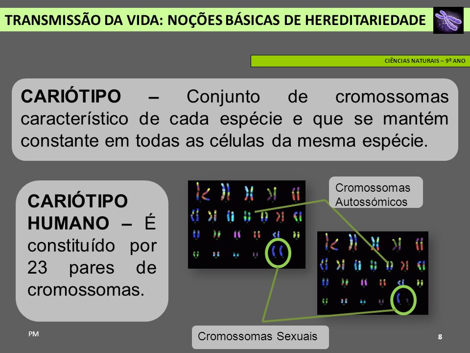 CARIÓTIPO HUMANO – É constituído por 23 pares de cromossomas.
