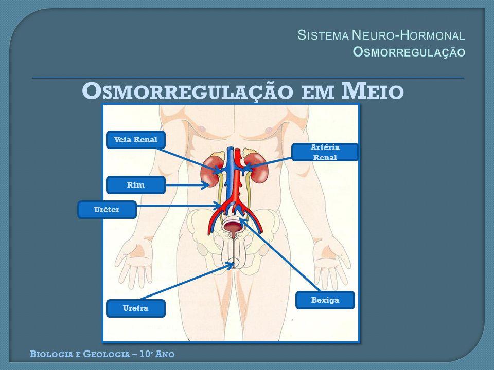 Sistema Neuro-Hormonal Osmorregulação
