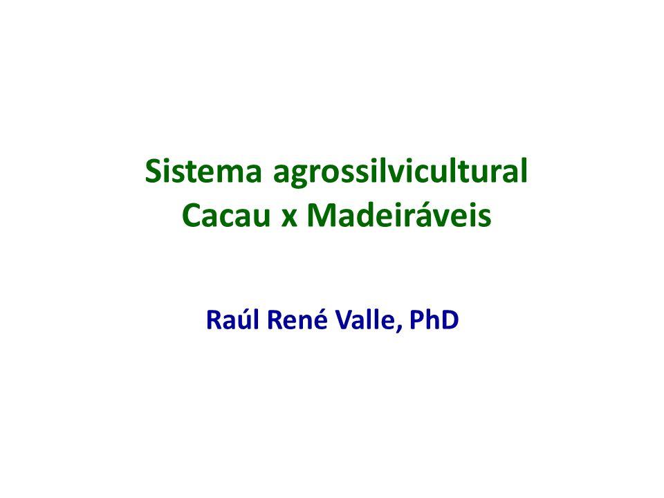 Sistema agrossilvicultural Cacau x Madeiráveis