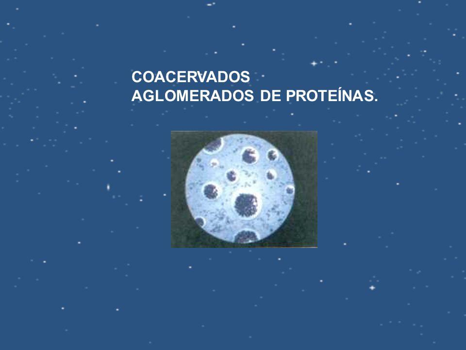 COACERVADOS AGLOMERADOS DE PROTEÍNAS.