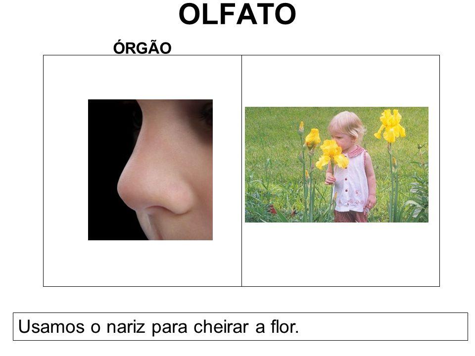 OLFATO ÓRGÃO Usamos o nariz para cheirar a flor.